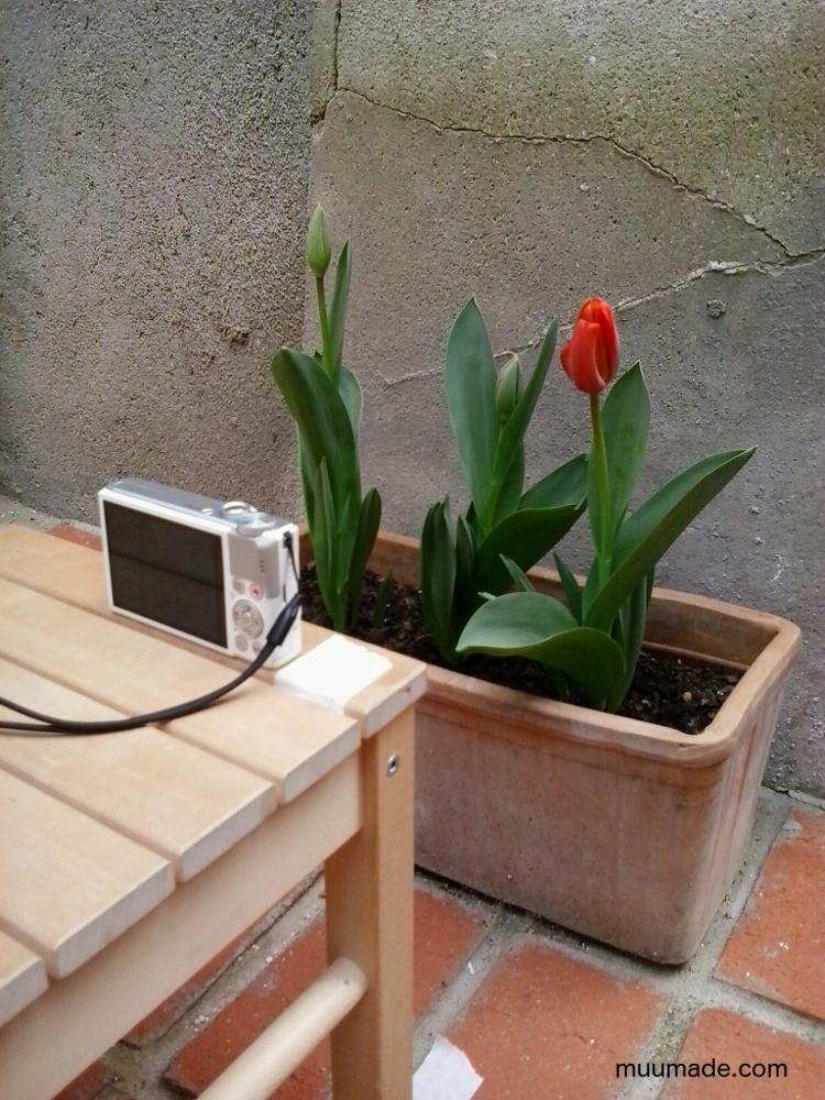 BlossomingTulipSetup